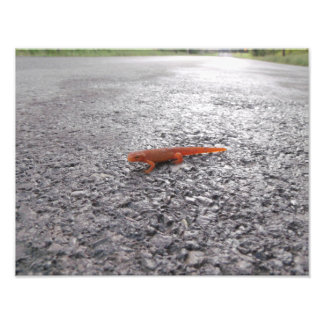 Why did the salamander cross the road? photo print