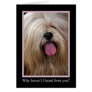 Why Haven't I Heard From You Animal Notecards Card