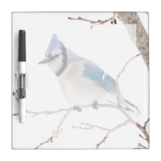 Wichita County, Texas. Blue Jay5 Dry Erase Board