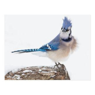 Wichita County, Texas. Blue Jay 1 Postcard