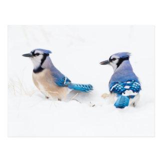 Wichita County, Texas. Blue Jay 2 Postcard