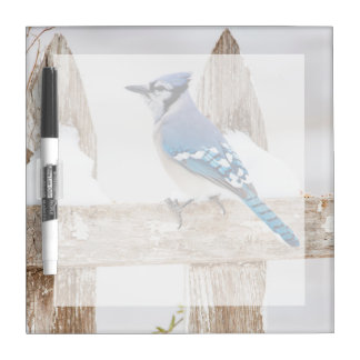 Wichita County, Texas. Blue Jay 3 Dry-Erase Board