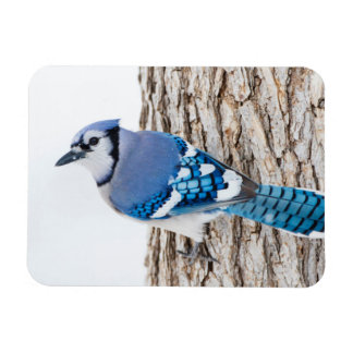 Wichita County, Texas. Blue Jay 4 Magnet