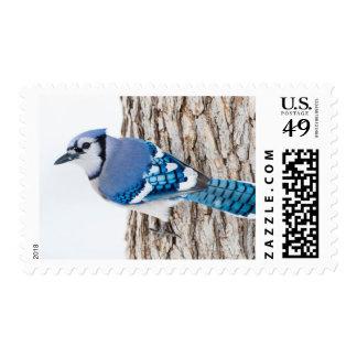 Wichita County, Texas. Blue Jay 4 Postage Stamp