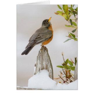 Wichita Falls, Texas. American Robin Card