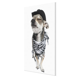 Wide-angle of a Chihuahua with his eyes closed Canvas Print