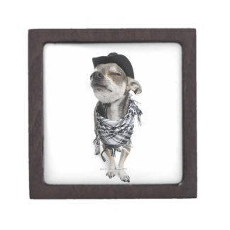 Wide-angle of a Chihuahua with his eyes closed Gift Box
