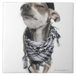 Wide-angle of a Chihuahua with his eyes closed Large Square Tile