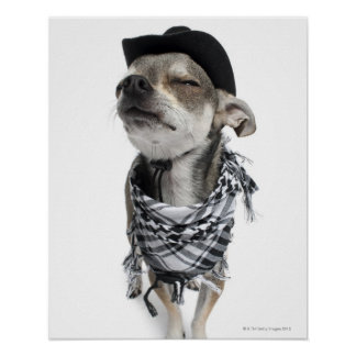 Wide-angle of a Chihuahua with his eyes closed Poster