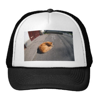 Wide angle view from the perspective distortion on trucker hat