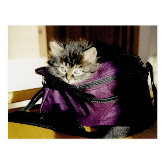 Wide Awake Kitten In A Burgundy Purse Postcard