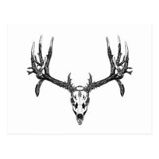 Wide buck skull postcard