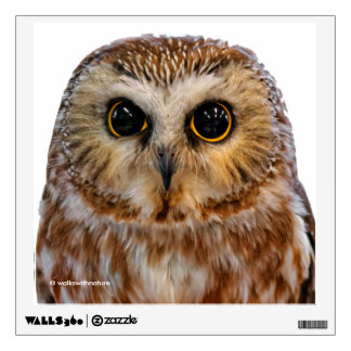 Wide-Eyed with Wonder: A Saw Whet Owl Wall Sticker