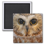 Wide Eyed with Wonder: Saw Whet Owl 2 Inch Square Magnet