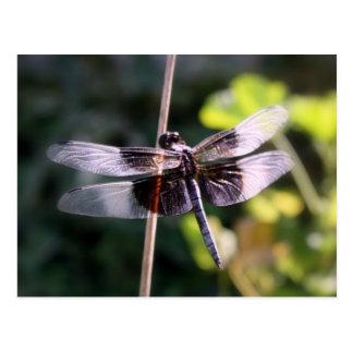 Widow Skimmer Dragonfly Photography Postcard