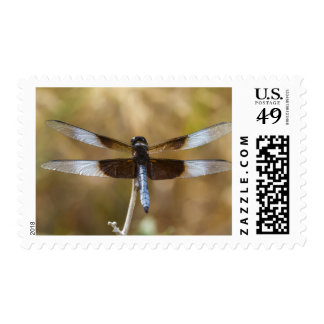 Widow Skimmer male Postage
