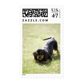Wiener dog (black) 2 postage
