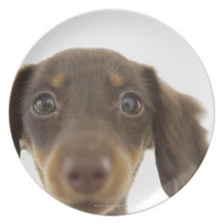Wiener Dog (brown) 2 Party Plate