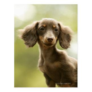 Wiener Dog (brown) Postcard
