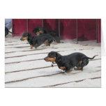 Wiener Dogs Races Cards