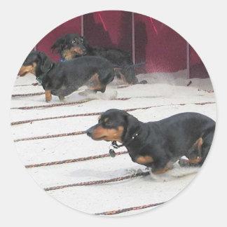Wiener Dogs Races Classic Round Sticker