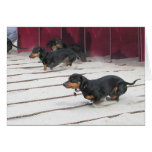Wiener Dogs Races Greeting Card