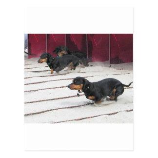 Wiener Dogs Races Postcard