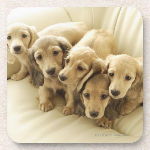 Wiener puppies beverage coasters