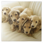 Wiener puppies large square tile
