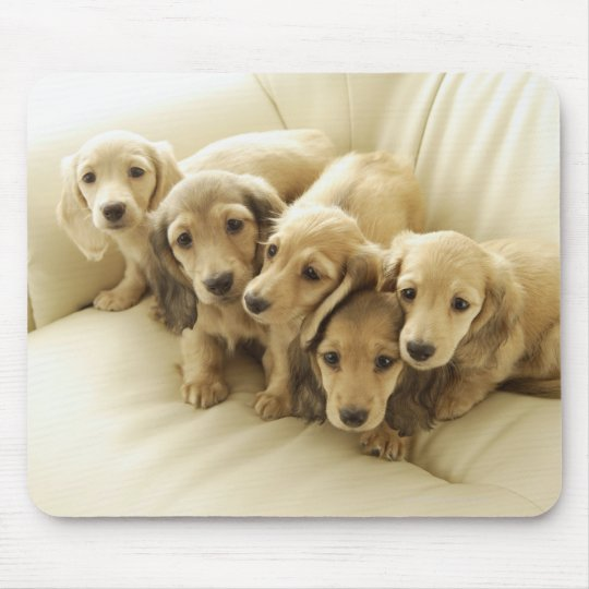 Wiener puppies mouse pad
