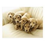 Wiener puppies postcard