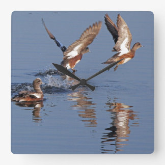 Wigeon Duck Birds Wall Clock