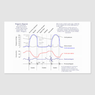Cardiac cycle gifts on zazzle wiggers diagram rectangular sticker ccuart Gallery