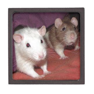 Wiki and Arthur rats Gift Box
