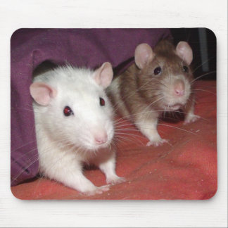 Wiki and Arthur rats Mouse Pads