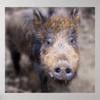 Wilbur el cerdo de la edad de hierro