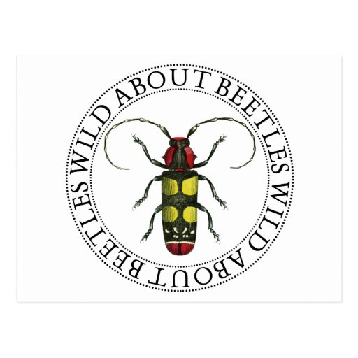 Wild About Beetles Post Cards