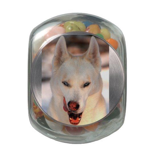Wild About Treats Pet Snack Jar Glass Candy Jar