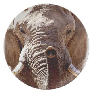 Wild Africa Elephant Head Melamine Plate