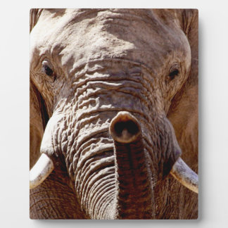 Wild Africa Elephant Head Plaque