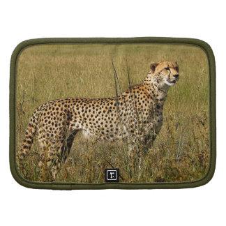 Wild African Cheetah in Savannah Grasses Planners