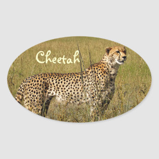 Wild African Cheetah in Savannah Grasses Stickers