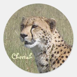 Wild African Cheetah in Savannah Grasses Sticker
