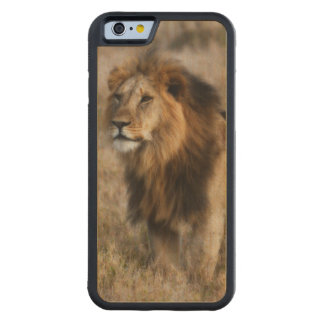 Wild African Lion in Kenya Wood iPhone 6 case Carved® Maple iPhone 6 Bumper