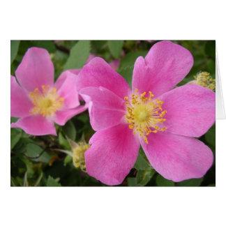 Wild Alberta Roses Greeting Cards