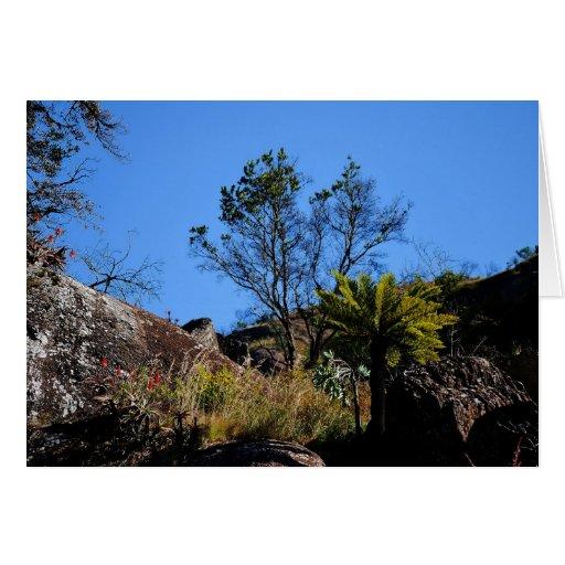 Wild Aloes Card