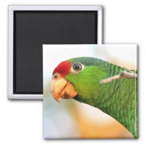 Wild Amazon Parrot Birds Animals Wildlife 2 Inch Square Magnet