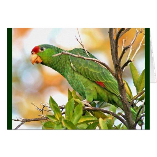 Wild Amazon Parrot Birds Animals Wildlife Card