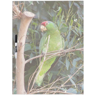 Wild Amazon Parrot Birds Animals Wildlife Dry-Erase Board