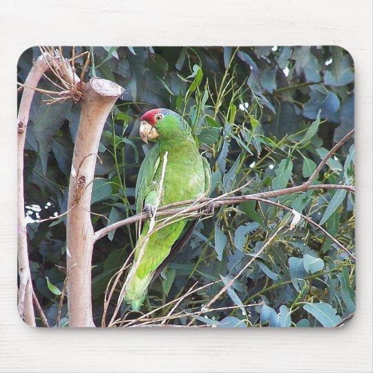Wild Amazon Parrot Birds Animals Wildlife Mouse Pad